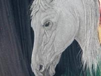 Nr 16. Hästprofil